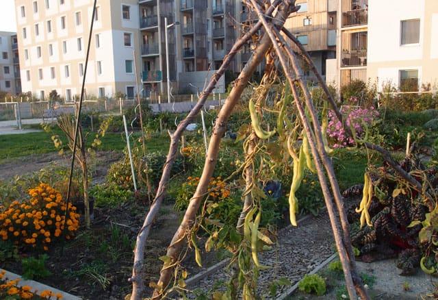 gemeinschaftsgaerten seestadt urban gardening mgs