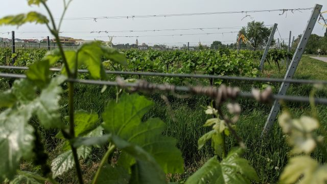 neusiedlersee burgenland weinbau geocaching teamevent mgs