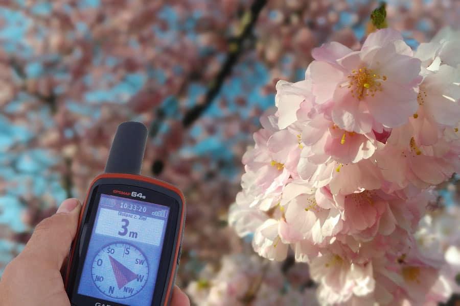 Blütenpracht im Stadtpark GPS