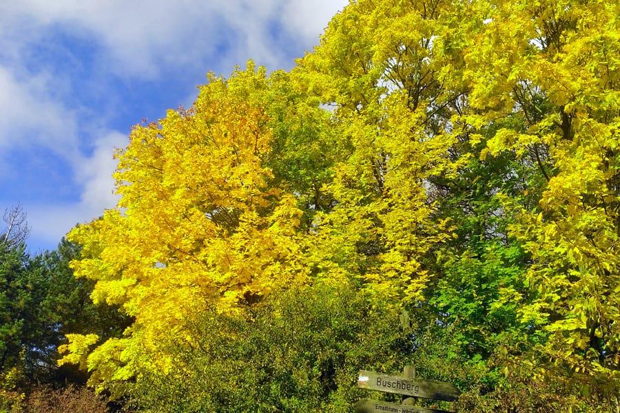 herbst laub bunt wald natur farben blaetter teamevent teambuilding outdoor ausflugsziel geocaching bs Kopie